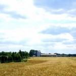 Blick auf Silos Agrargenossenschaft Frauenhain