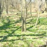Um den Waldfriedhof