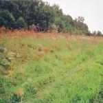 Quellmoor in Raden